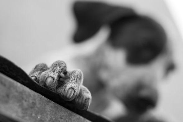 La falta de cuidados marca la vida de algunos animales. Foto: Emilio Cuenca.
