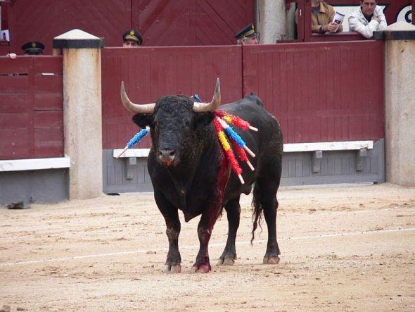 Un toro maltratado en una corrida. Foto: Manuel González Olaechea y Franco / Creative Commons.