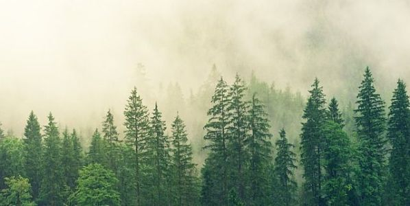 Proponemos tres lecturas verdes entre las que se encuentra 'El bosque. Instrucciones de uso', de Peter Wohlleben. Foto: Pixabay.