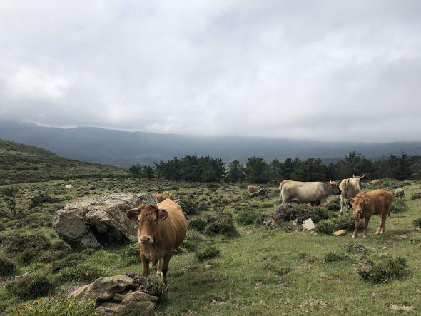 La plataforma Por Otra PAC reclama más apoyos para la ganadería extensiva.