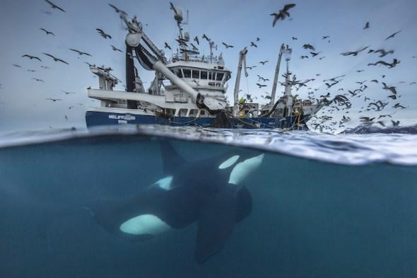audun-rikardsen_wildlife-photographer-of-the-year