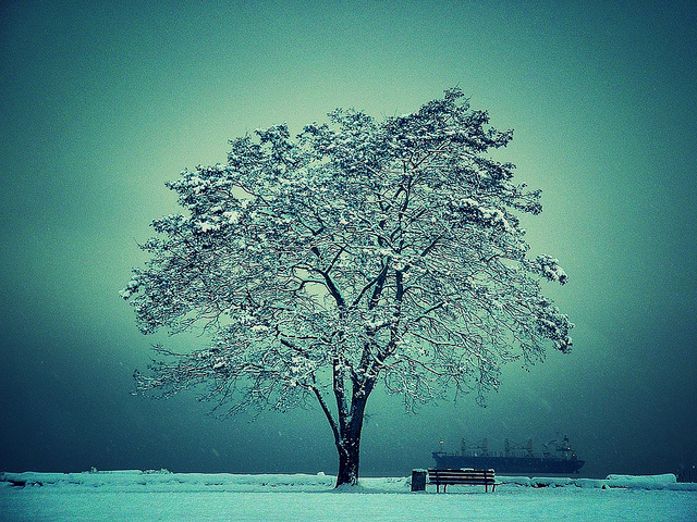 Un árbol nevado. Foto: Flickr Creative Commons.