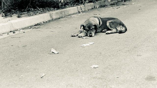 Un perro abandonado en la calle. Foto: Pixabay.
