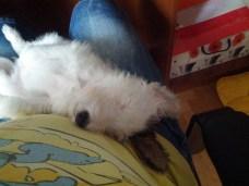 Ο Μένιος κοιμάται στην κοιλίτσα μου