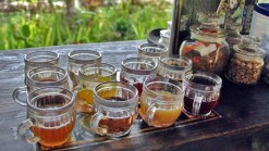 luwak-coffee-trip