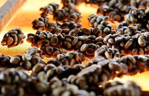 what-is-kopi-luwak-coffee