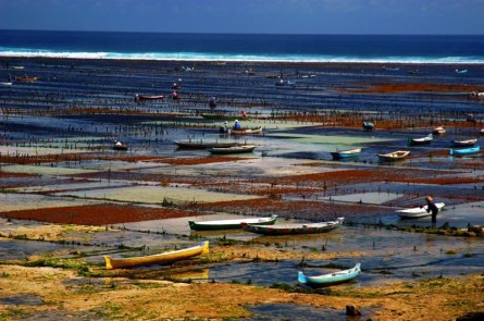 sea-weed-farm-lembongan-1323144666