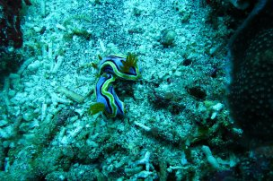 2015-05-12-Bali-Plongee-Nusa-Penida-Crystal-Bay-11