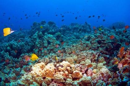 snorkeling-crystal-bay-bali