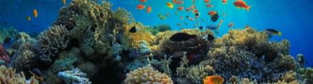 beautiful view of sea life
