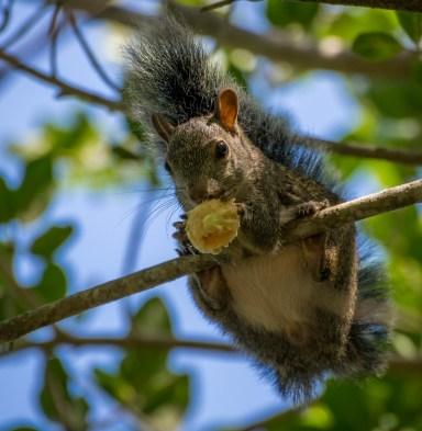 Esquilinho no Cenote dos Ojos