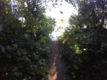 Pathway 8th Apr 2017