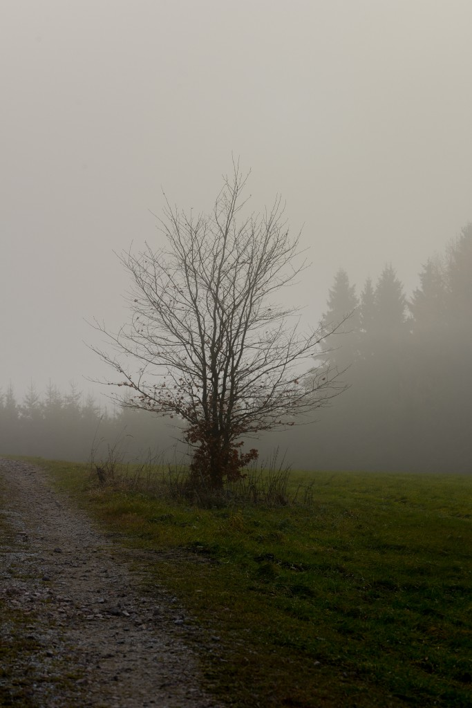Nebel_N-3