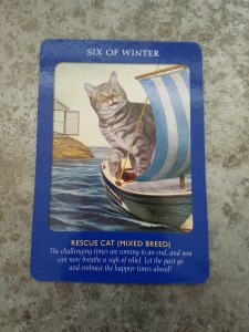 six-of-winter-rescue-cat