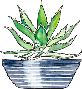 aloe-plant-this-angelena