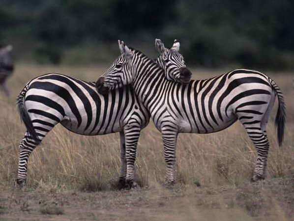 للانستقرام Love-in-the-animal-w