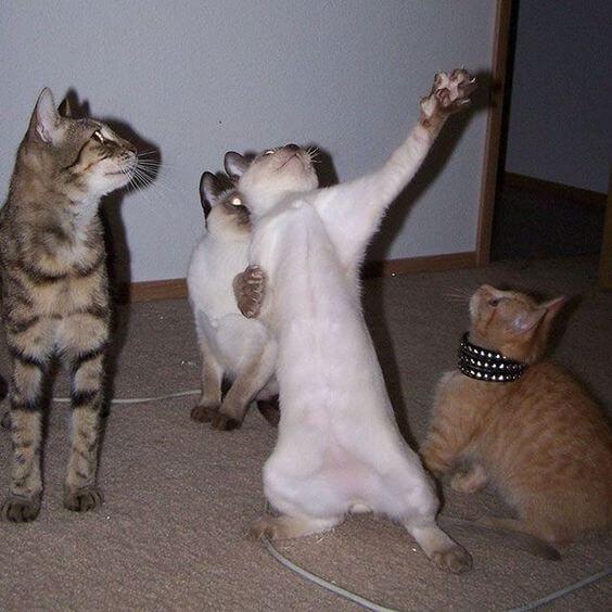 للانستقرام funny-cats-3.jpg