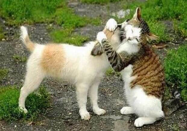 للانستقرام funny-cats-4.jpg