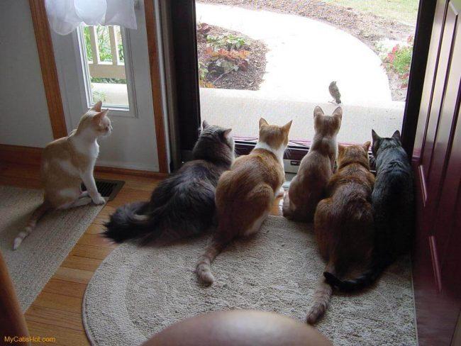 للانستقرام funny-cats-7-650x488