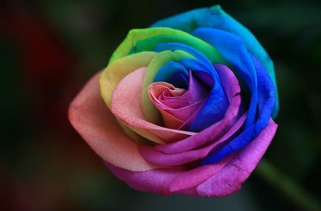 للانستقرام Colorful-flowers-ros