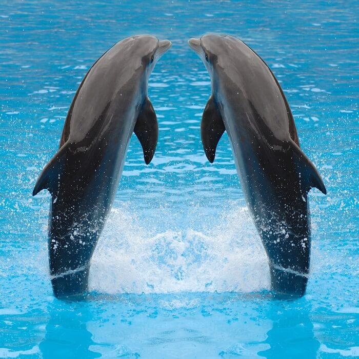 الإنسان للانستقرام bigstock-dolphin-twi