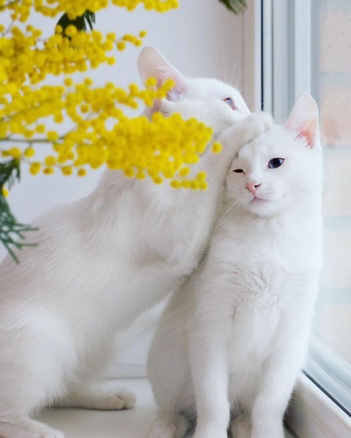 للانستقرام Twin-Cats-In-The-Wor