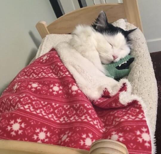 لانستقرام the-cat-is-Sophie-2.