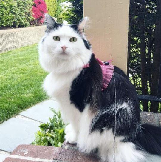 لانستقرام the-cat-is-Sophie-3.