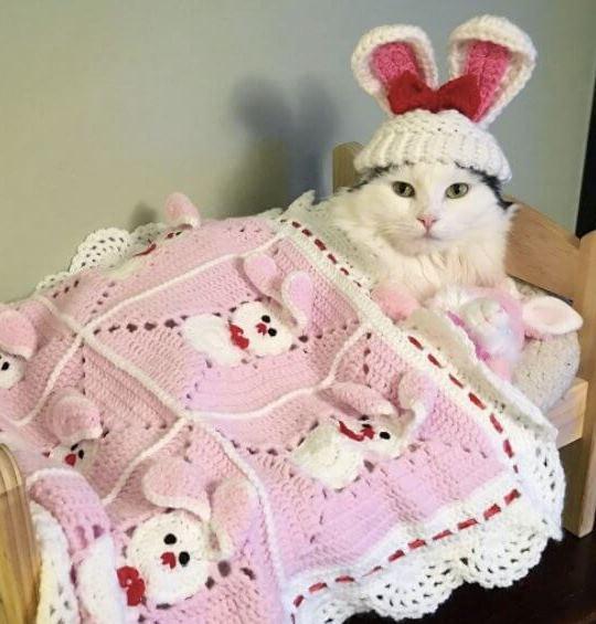 لانستقرام the-cat-is-Sophie-5.