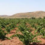 Cata de vinos de Almería. ¡Sí, sí, de Almería!