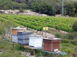 Viña de Les Abelles (abejas)