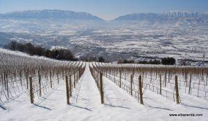 Viñas nevadas de Castell d'Encus