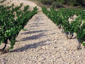 Viñas de monastrell y terruño de Casa Castillo