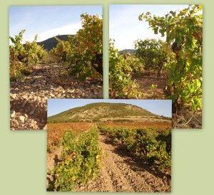 Viñas de Garnacha balanca, Malvasía y Viura
