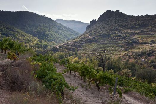 Sebio-Valdeorras