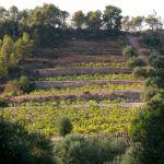 Orto Vins: el trabajo bien hecho de 4 viticultores en el Masroig