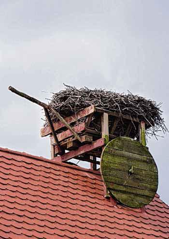 Der Horst ist leer an der Storchenmühle Steckby.