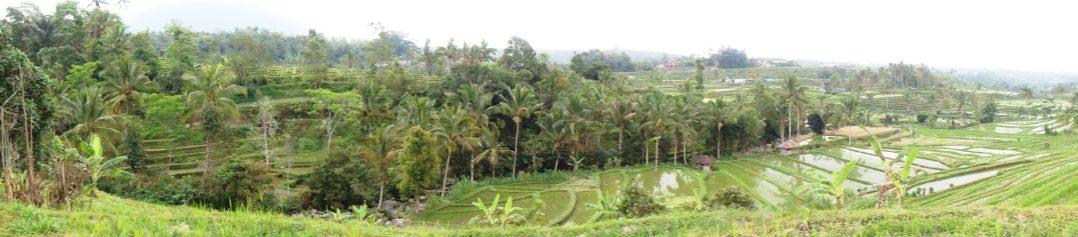 Panorámica Jatiluwih (Arrozales) Bali