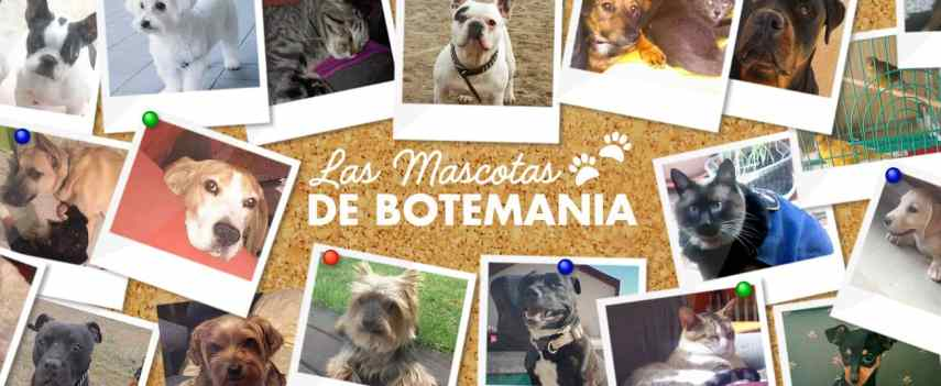las mascotas de botemania