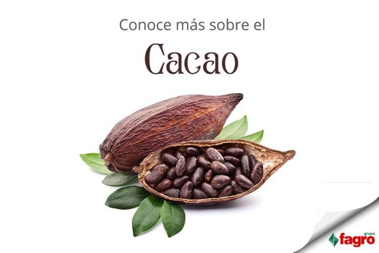 Conoce más sobre el Cacao