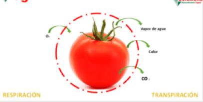 Aplicación de cera vegetal