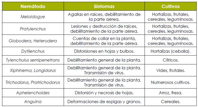 especies de nematodos