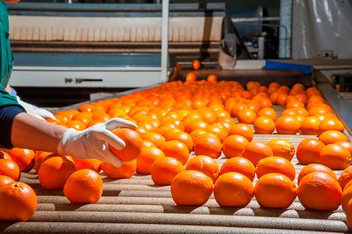 infección de frutos en almacenamiento