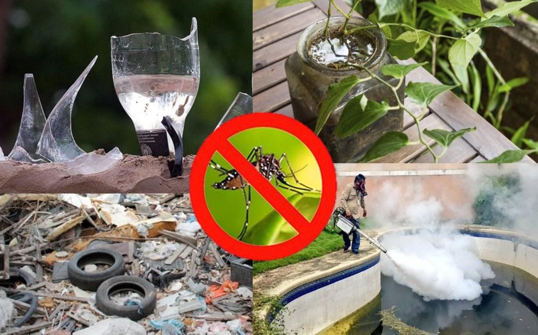 Elimina los criaderos de mosquitos