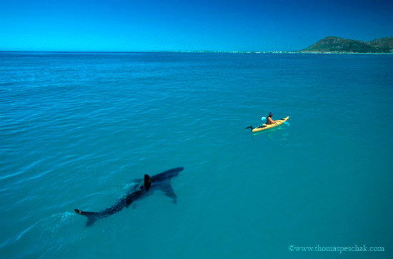 Tiburones. (3/3)