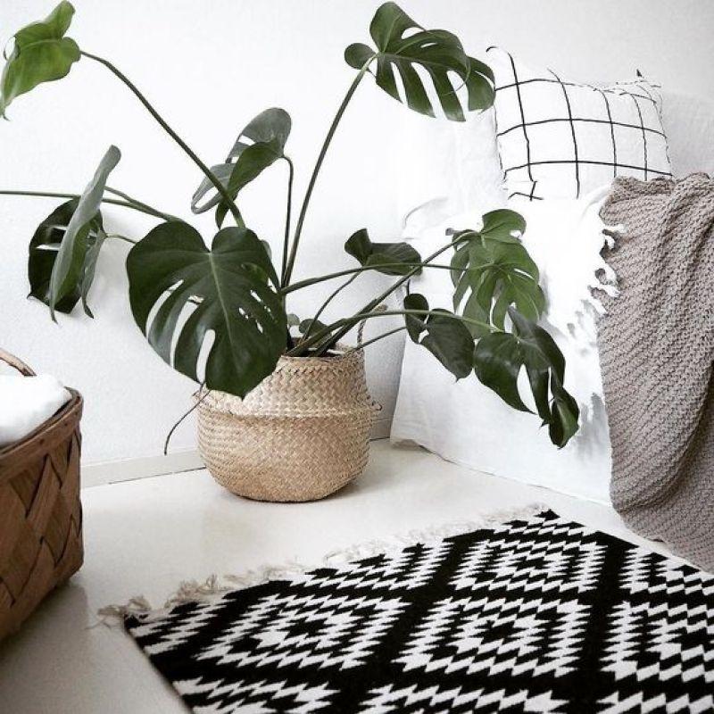 Monstera-plantas-interior-sobreviven