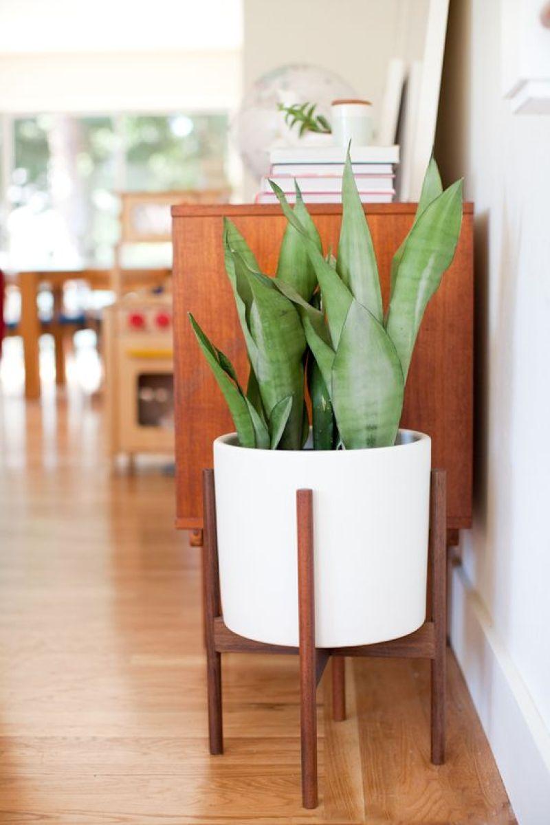 Sansevieria-plantas-interior-sobreviven