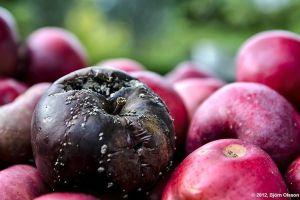 Una manzana podrida estropea al resto