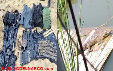 Tras balacera decomisan hasta tres cocodrilos en Guanajuato (IMÁGENES)