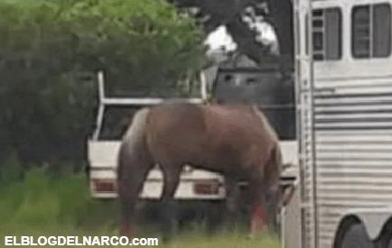 Sicarios irrumpen en una carrera de caballos para ejecutar a sangre fría a 4 personas, en Jalisco